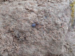 araignée 17.06.16 (17)